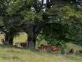 Schwarzwald-27-4135